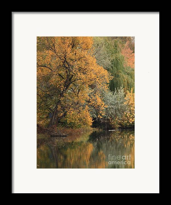 Landscape Framed Print featuring the photograph Autumn Riverbank by Carol Groenen