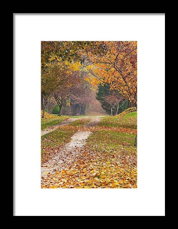 Autumn Framed Print featuring the photograph Autumn Road by Stephen Sisk