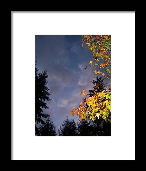 Autumn Framed Print featuring the photograph Autumn Sky by Ken Day