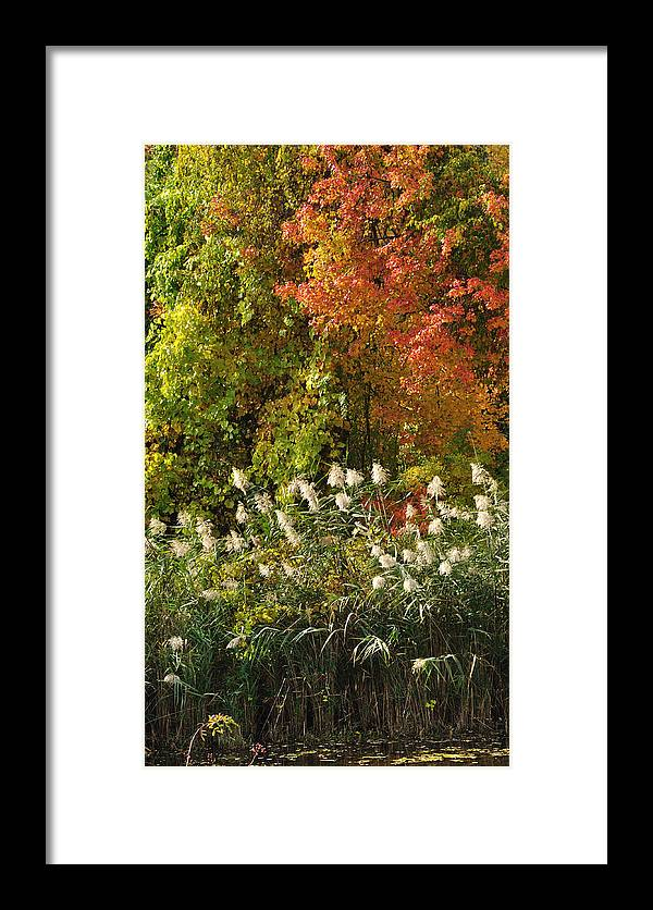Fall Framed Print featuring the photograph Autumn Tranquility 3 by Frank Mari