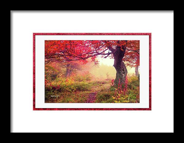 Autumn Framed Print featuring the photograph Autumn Tree by Garland Johnson