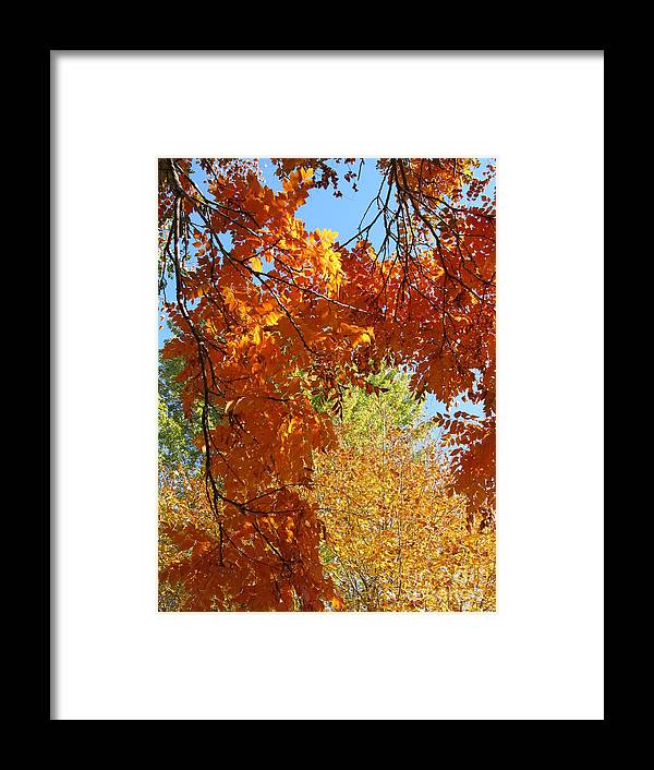 Autumn Framed Print featuring the photograph Autumn Trees by Shylee Charlton