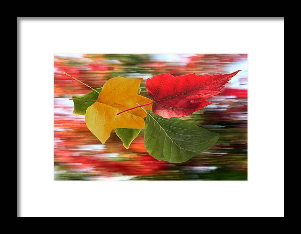 Wind Framed Print featuring the photograph Autumn Wind by Barbara White
