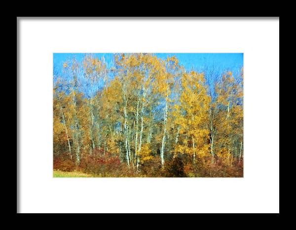 Framed Print featuring the photograph Autumn Woodlot by David Lane