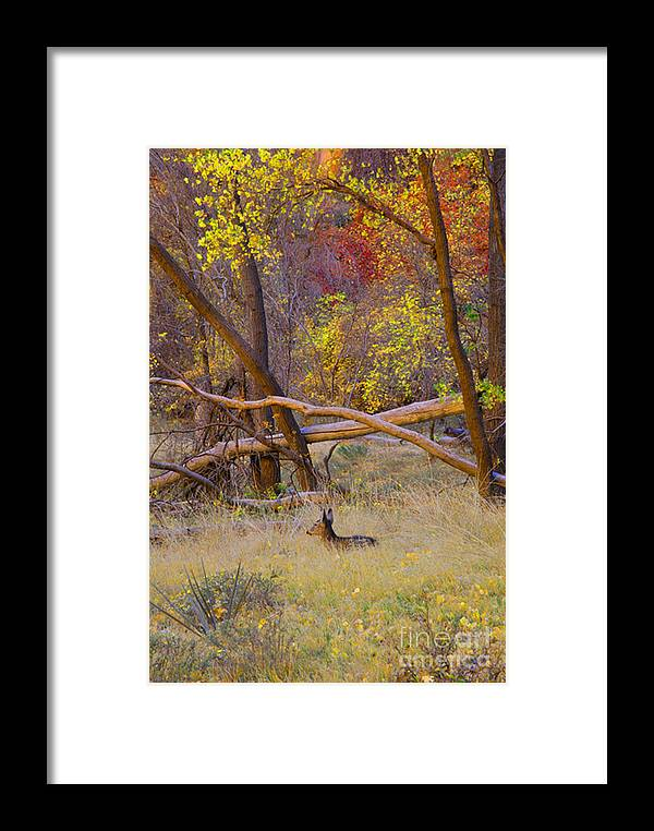 Deer Framed Print featuring the photograph Autumn Yearling by Dennis Hammer