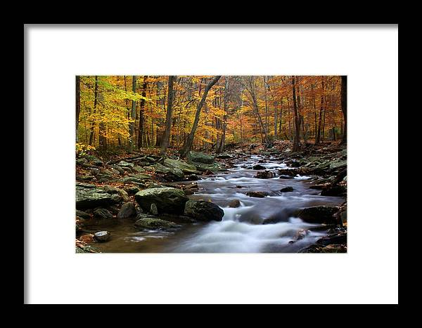 Autumn Framed Print featuring the photograph Autumnal Face by Mitch Cat