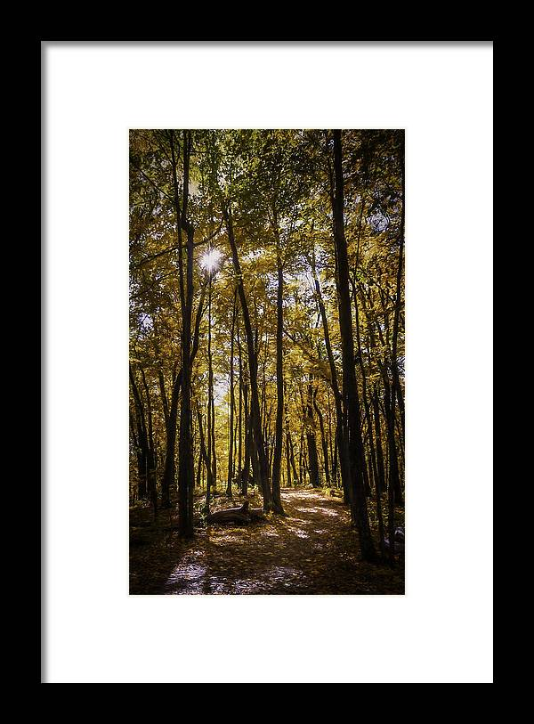 Autumn Framed Print featuring the photograph Autumns Fire by Scott Norris