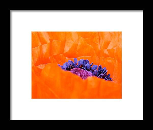 Artwork Framed Print featuring the photograph Autumn's Glory by Lucia Del