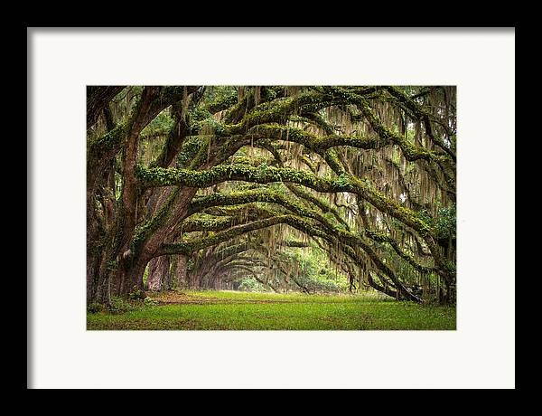 Charleston Sc Framed Print featuring the photograph Avenue Of Oaks - Charleston Sc Plantation Live Oak Trees Forest Landscape by Dave Allen