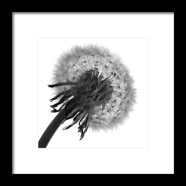Black And White Framed Print featuring the photograph Await The Breeze by Terence Davis