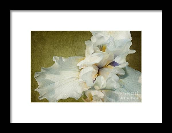 Iris Framed Print featuring the photograph Awakening by Beve Brown-Clark Photography