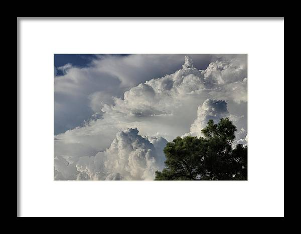 Sky Framed Print featuring the photograph Awesome Cloulds And A Pine Tree by Maris Salmins