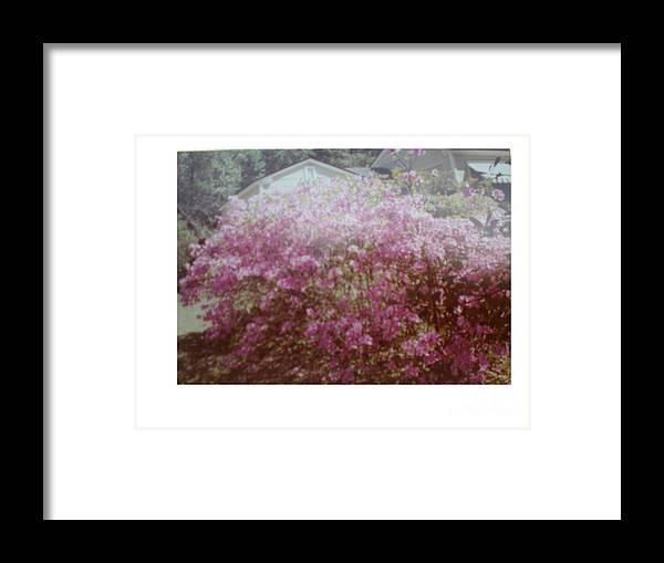 Azalea's Framed Print featuring the photograph Azalea Framed By Roof by Hal Newhouser
