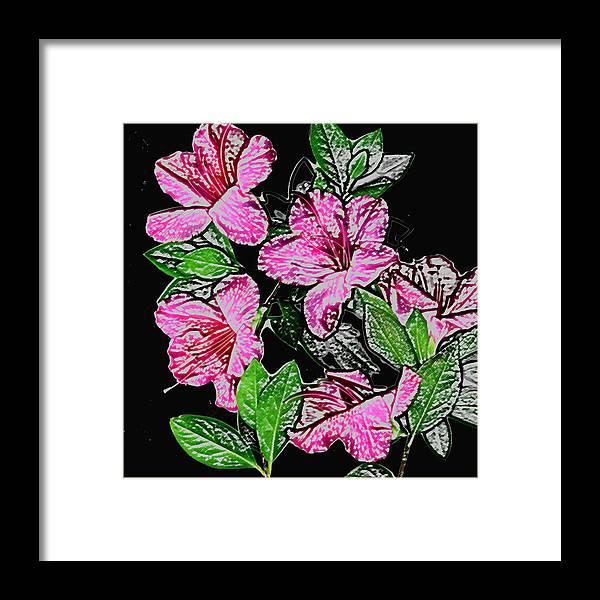 Azalea Framed Print featuring the photograph Azalea by Wayne Potrafka