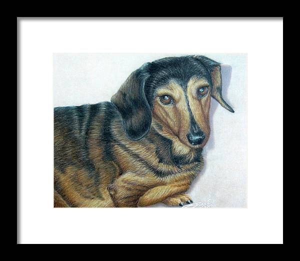 Fuqua - Artwork Framed Print featuring the drawing Babe by Beverly Fuqua