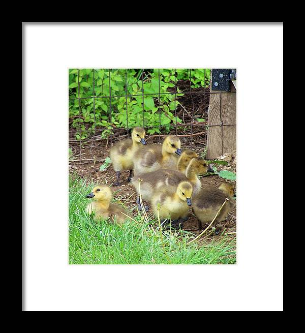 Babies Framed Print featuring the photograph Baby Baby by Vijay Sharon Govender