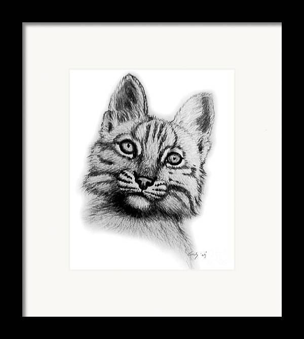 Baby Bobcat Framed Print featuring the drawing Baby Bobcat by Nick Gustafson