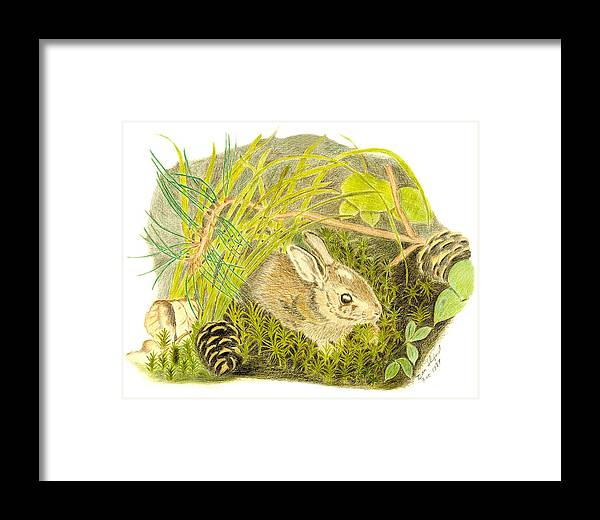 Rabbit Framed Print featuring the drawing Baby Bunny Down For The Night by Daniel Shuford