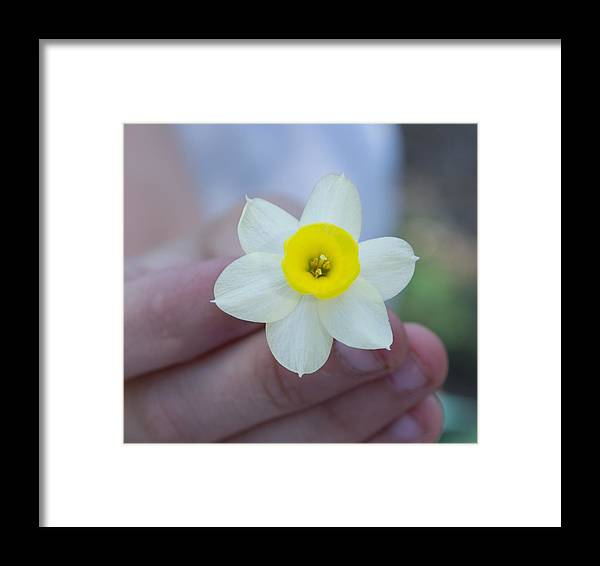 Small Baby Daffodil Flower Close Up Framed Print featuring the photograph Baby Daffodil by Mindy Roth