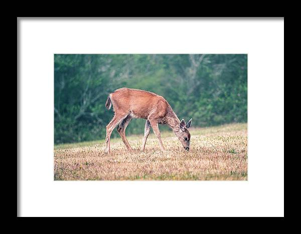 Deer Framed Print featuring the photograph Baby Deer Walking On Grass By Forest by Open Range