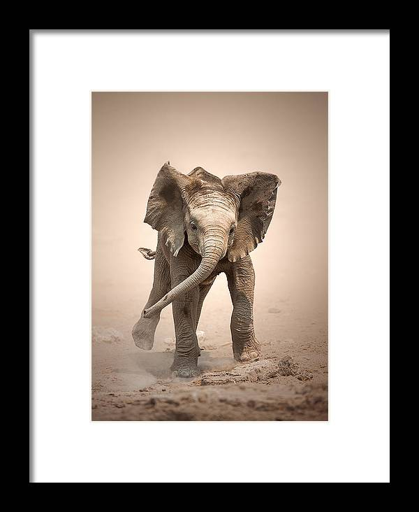 Elephant Framed Print featuring the photograph Baby Elephant Mock Charging by Johan Swanepoel