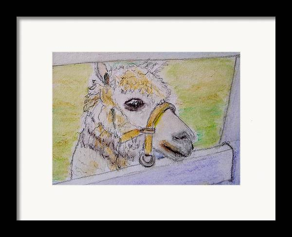 Baby Framed Print featuring the drawing Baby Llama by Lessandra Grimley
