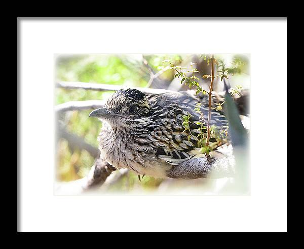 Greater Roadrunner Framed Print Featuring The Photograph Baby By Saija Lehtonen