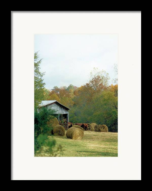 Animals Framed Print featuring the photograph Back At The Barn by Jan Amiss Photography
