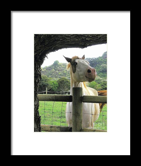 Animals Framed Print featuring the photograph Back Fence Gossip by Mary Deal