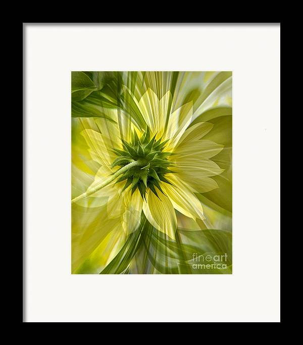 Floral Framed Print featuring the photograph Back Petal by Chuck Brittenham