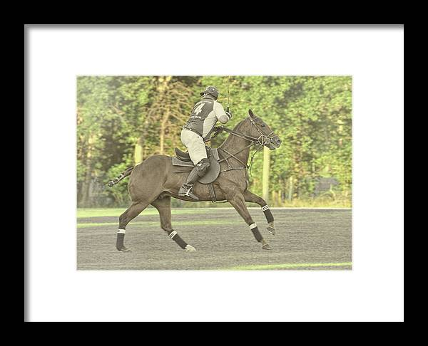 Polo Framed Print featuring the photograph Back Shot by JAMART Photography