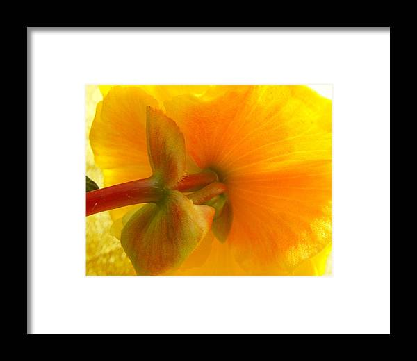 Begonia Framed Print featuring the photograph Back Side by Kae Cheatham