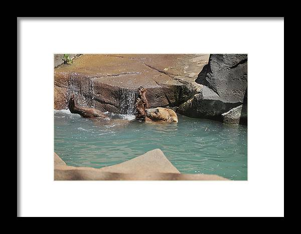 Grizzly Framed Print featuring the photograph Back Stroke by Margaret Augustine