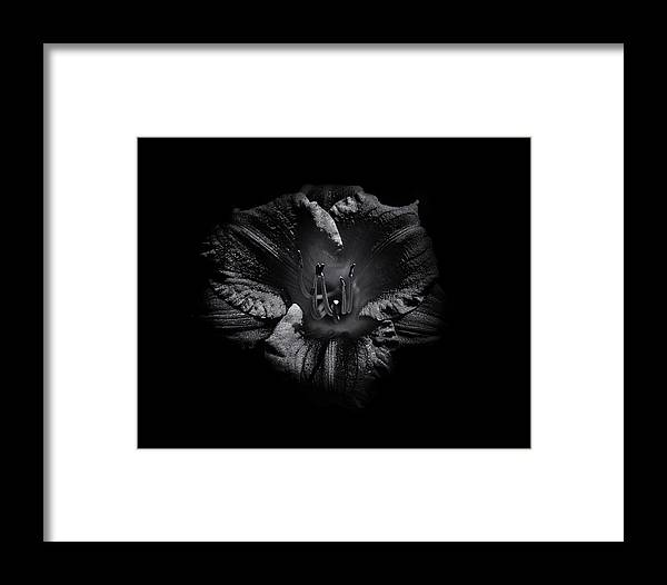 Brian Carson Framed Print featuring the photograph Backyard Flowers In Black And White 26 by Brian Carson
