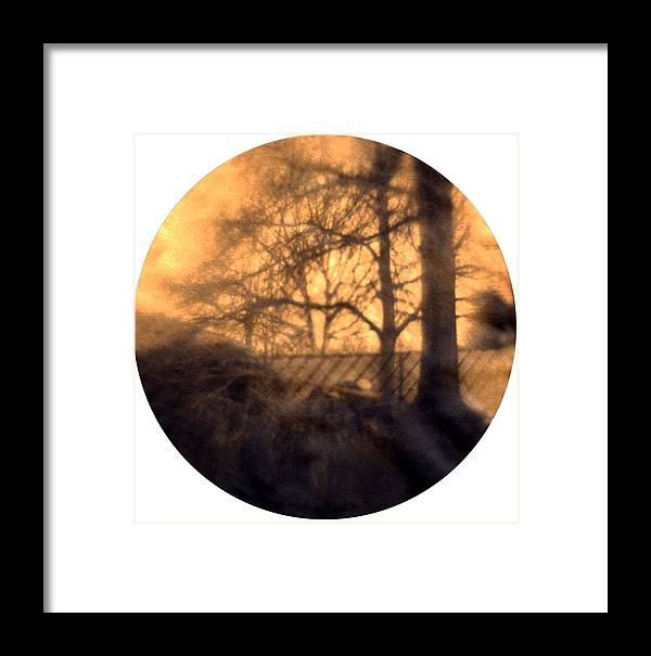 Trees Framed Print featuring the photograph Backyard Woodpile by Diana Ludwig