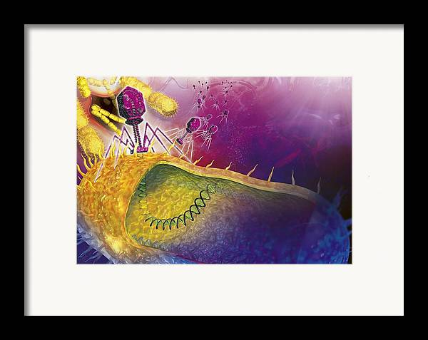 Bacteria Framed Print featuring the photograph Bacteriophages Attacking Bacteria by Claus Lunau