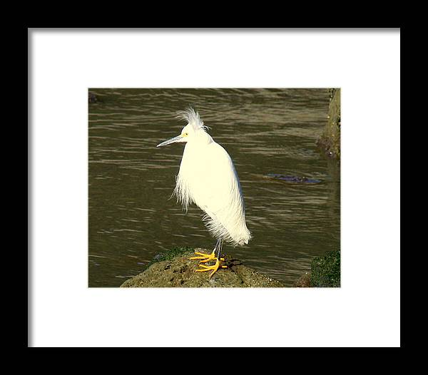 Nature Framed Print featuring the photograph Bad Hair Day by Kerry Reed