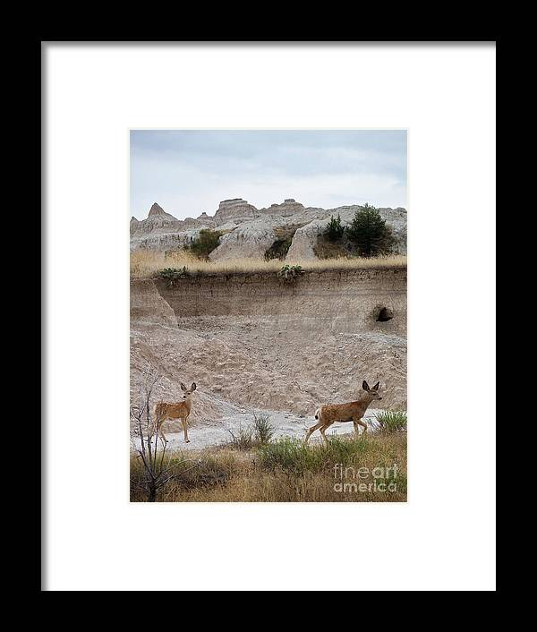 Badlands Framed Print featuring the photograph Badlands Deer Sd by Tommy Anderson