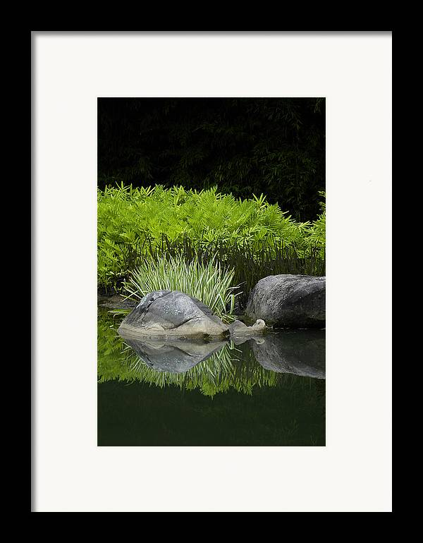 Water Framed Print featuring the photograph Balance by Deborah Gallaway