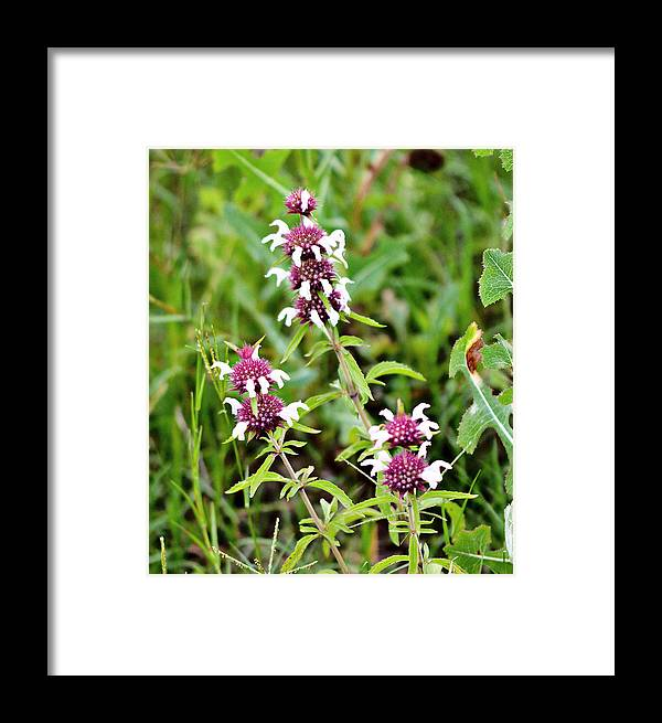 Wildflowers Framed Print featuring the photograph Balancing Balls by James Smullins