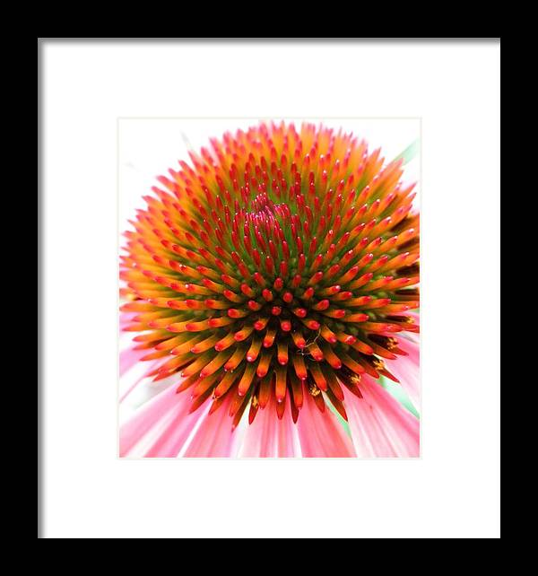 Flower Framed Print featuring the photograph Ball Of Fire by Jeanette Oberholtzer