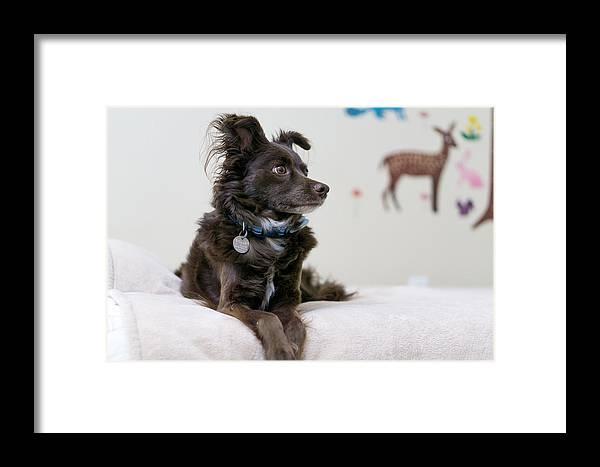 Dog Framed Print featuring the photograph Bambi by Daniel Seok