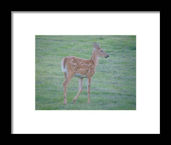 Fawn Framed Print featuring the photograph Bambi by Karla Hoffman
