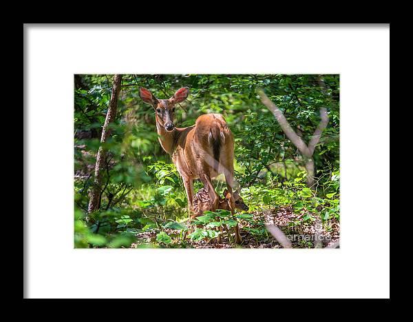 Deer Framed Print featuring the photograph Bambi's Mom by Clark DeHart