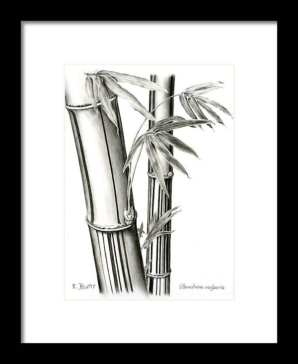 Drawing Framed Print featuring the drawing Bamboo by Karla Beatty