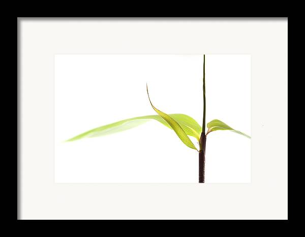 Minimalism Framed Print featuring the photograph Bamboo Meditation 1 by Carol Leigh
