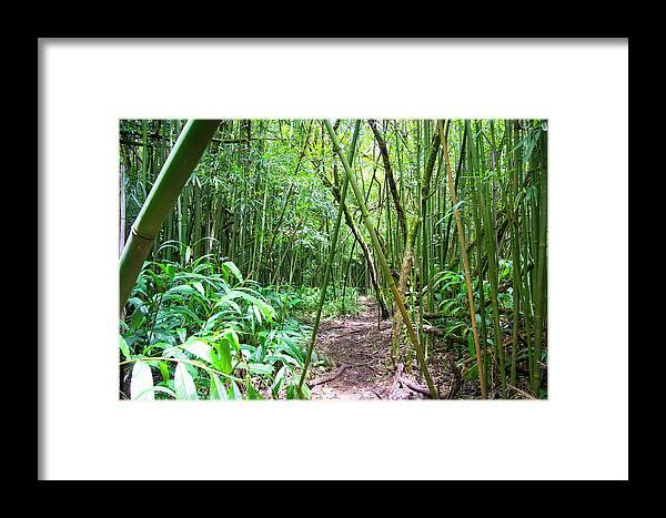 Bamboo Framed Print featuring the photograph Bamboo Trail by Debra Casey