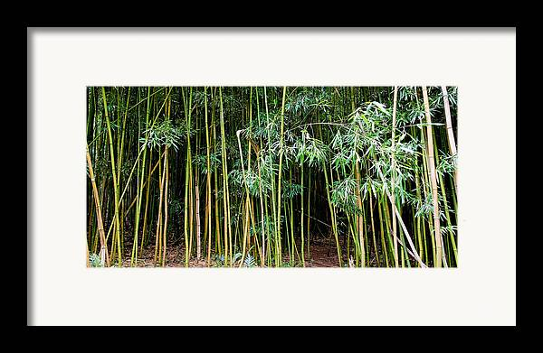 Bamboo Wind Chimes Framed Print featuring the photograph Bamboo Wind Chimes Waimoku Falls Trail Hana Maui Hawaii by Michael Bessler