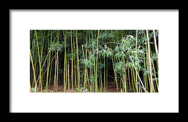 Bamboo Wind Chimes Framed Print featuring the photograph Bamboo Wind Chimes Waimoku Falls Trail Hana Maui Hawaii by Michael Bessler