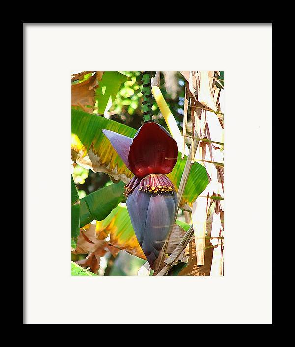 Tree Framed Print featuring the photograph Banana Tree by Judy Waller